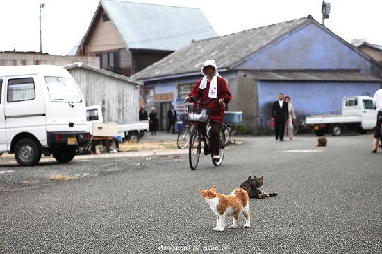 고양이들의 섬이라 불리는 아이노시마 섬