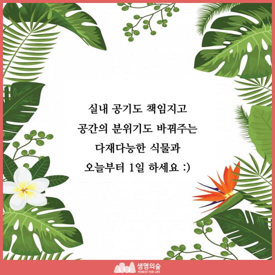 [카드뉴스] 실내식물 키우기