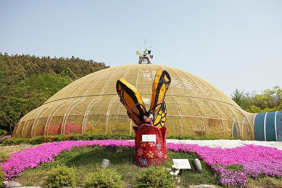 부평에서 가장 많은 나비가 살고 있는 인천 나비공원