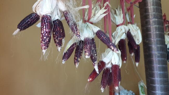 공주 도시텃밭연구소의 토종씨앗들...