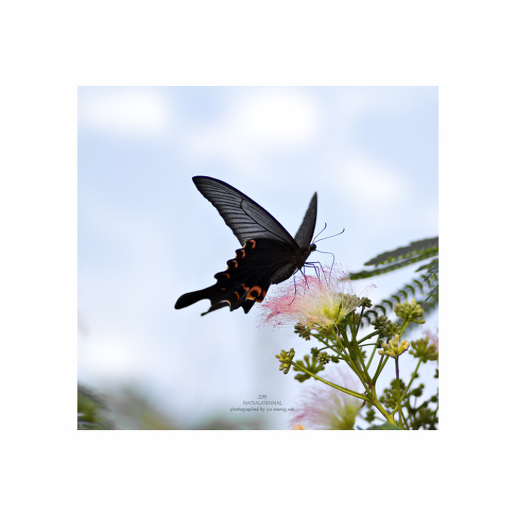 반가운 나비들.
