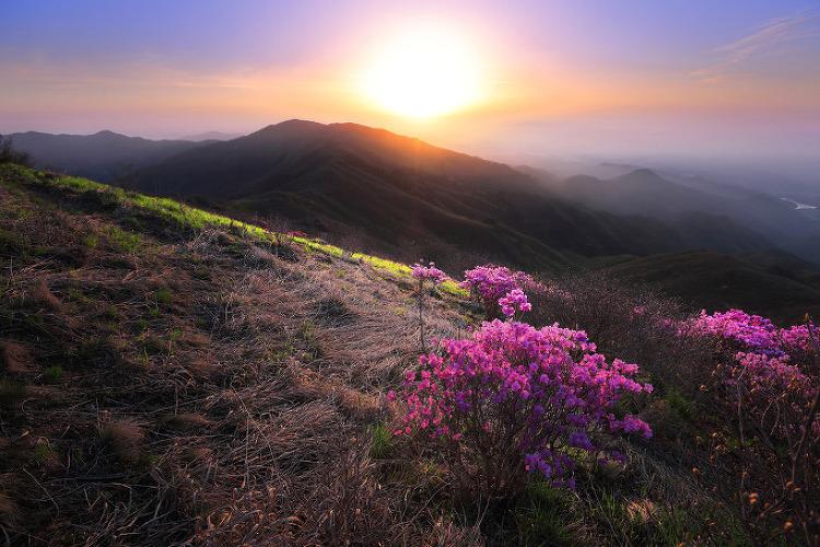 소백산 철쭉. 5월초 풍경