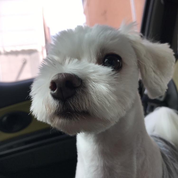 강아지 짖는이유 주인때문일 수도 있다