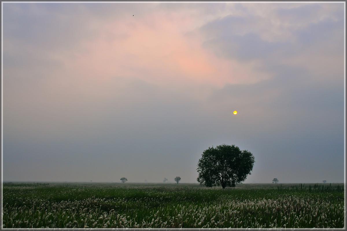 시화호의 새벽 풍경들(2012년 6월)