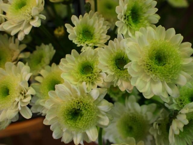 겨울에 꽃이 핍니다. 흐드러지게
