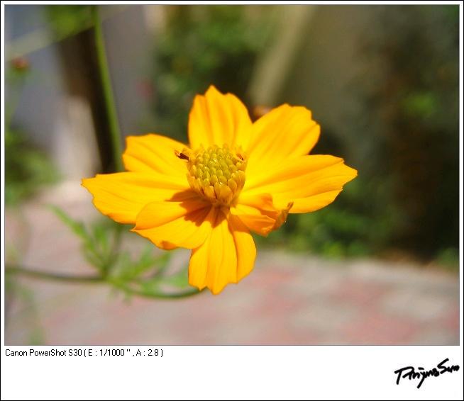 08_0858_IMG.JP