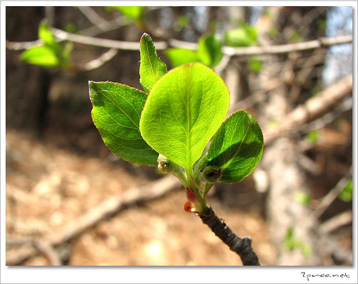 봄의 전령사 새싹 사진, 나무 새싹