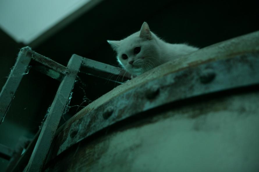영화 추천, 공포 영화, 공포영화, 영화 고양이, 공포영화 추천 고양이 : 죽음을 보는 두 개, 고양이 : 죽음을 보는 두 개, 영화 고양이 추천, 영화 고양이 후기, 영화