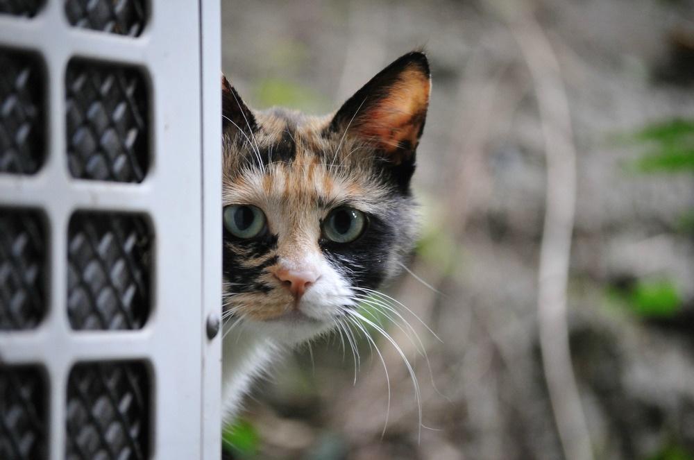 삼색 길고양이