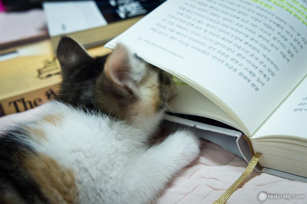 책 읽는 건 어렵지 않다!