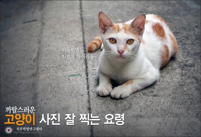 [촬영 팁]고양이 사진 잘 찍는 요령
