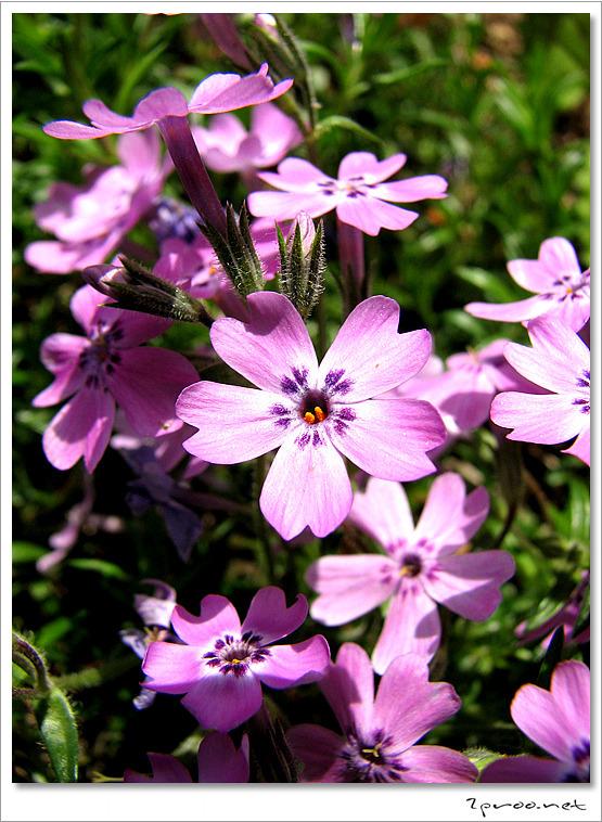 티스토리달력 2010 봄