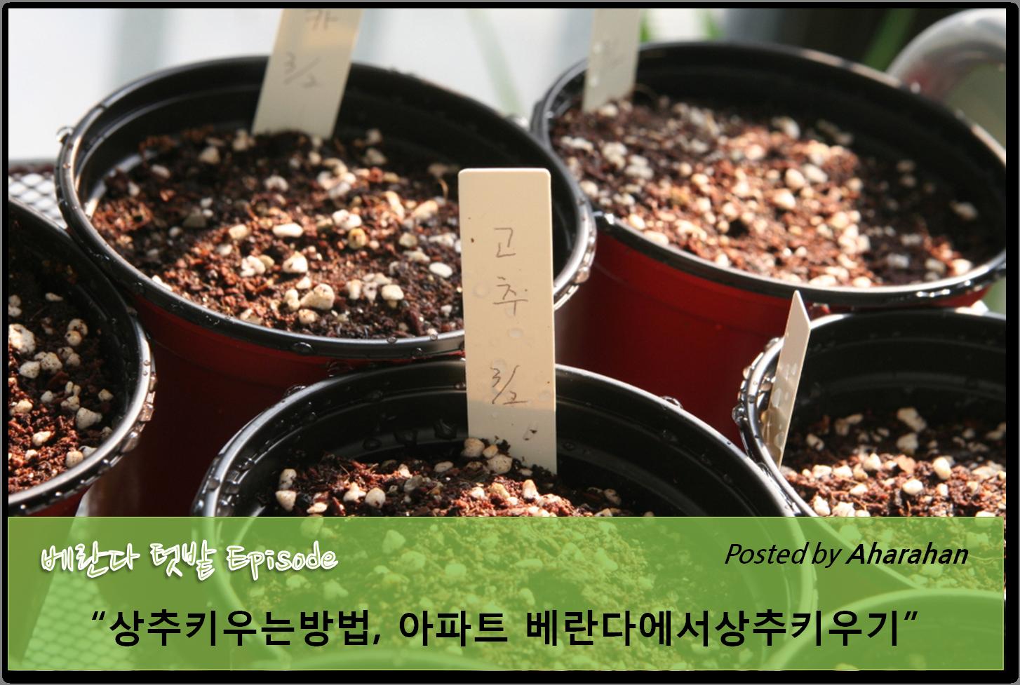 베란다채소밭) 상추키우는방법, 아파트 베란다를 채소밭, 상추키우기