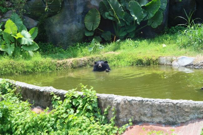 발리 사파리 곰