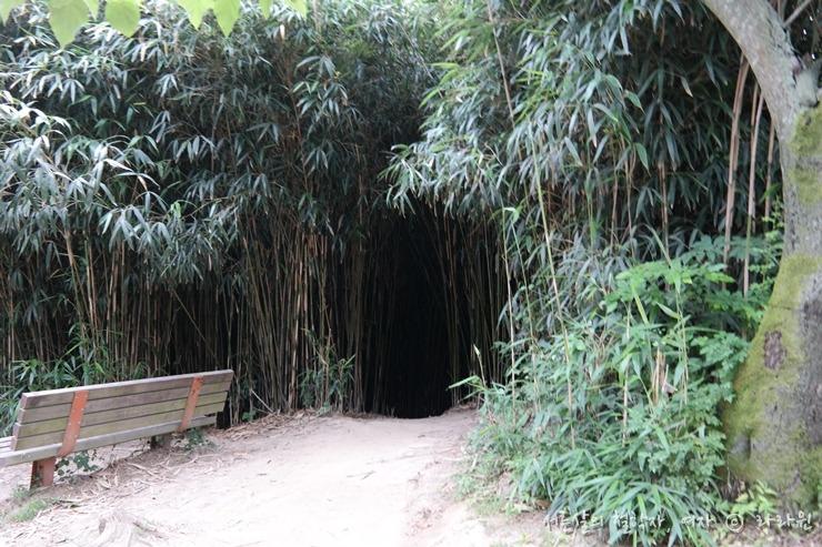 죽녹원, 대나무숲,