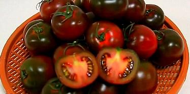 흑토마토 영양소&효능