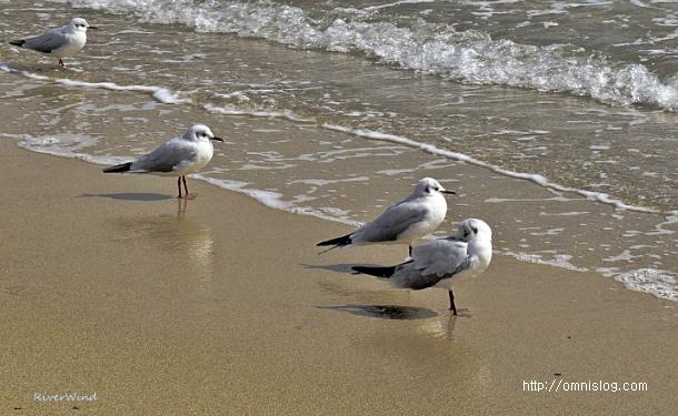 부산갈매기 휴식