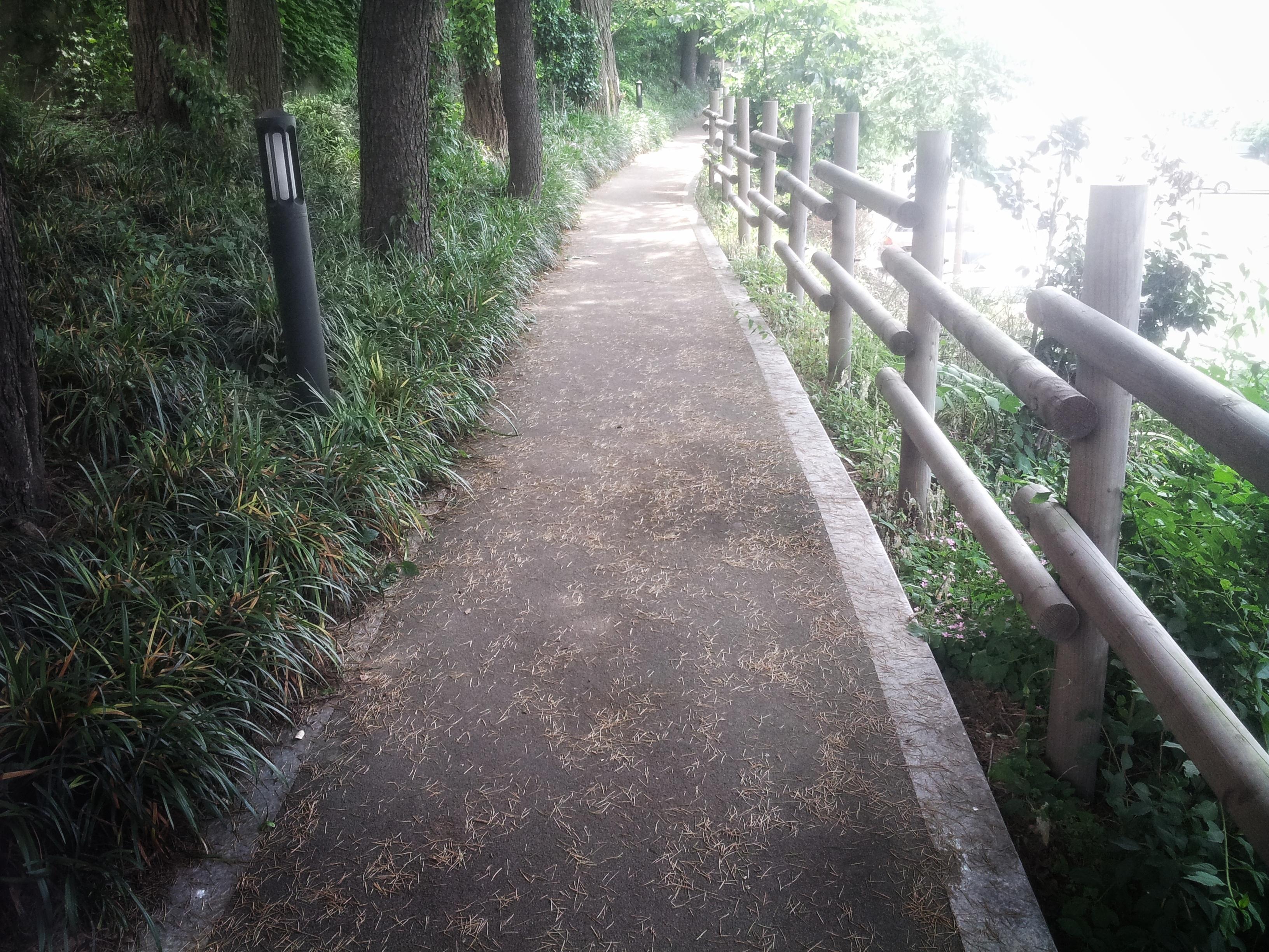 숲길 나무숲 길 산책 투어 풍경 경치 나무 일출 야외 울타리 난간 휴식 자연 태양빛 나무 무료이미지