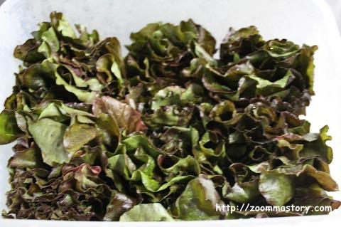 상추, 잎채소, 보관법, 노하우