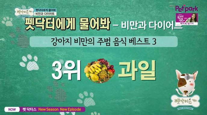 강아지 비만의 원인 중 하나로 과일을 선정