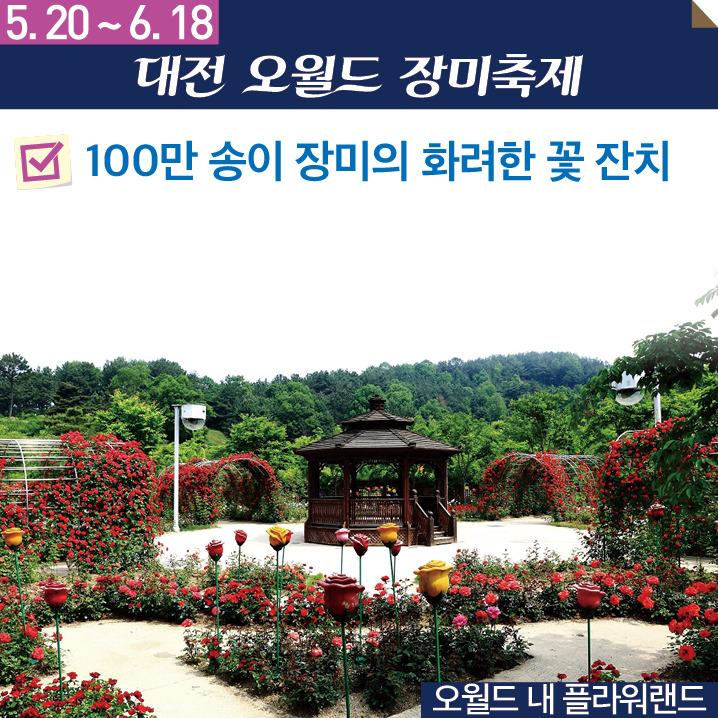 2017 5월 대전축제 오월드장미축제