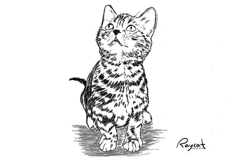고양이 3개월째 스케치