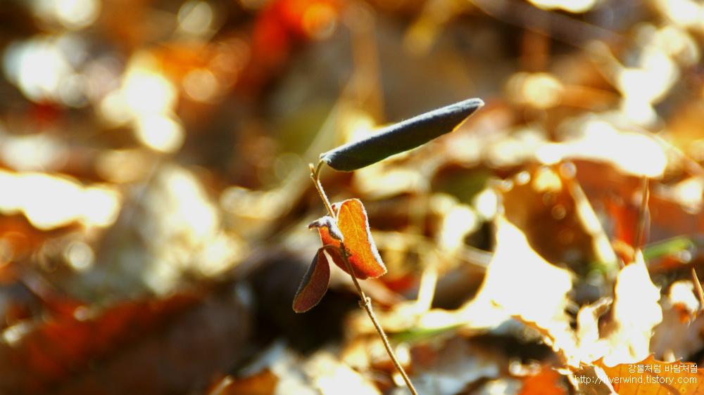 낙옆 잎새