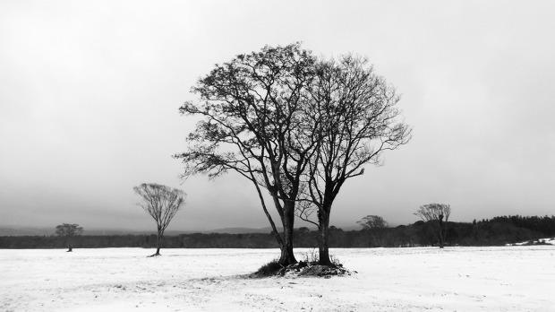 눈내린삼다수목장