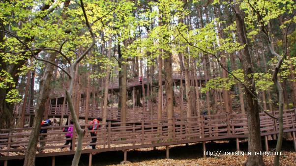 성지곡수원지 편백숲길
