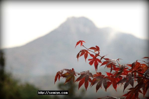 낙엽-우울-가을증후군-국화-자외선-빛의 입자-산소-질소분자-고기압-빛의 파장 반사-빛의 산란-석양-노을-무지개-대기-프리즘-가시광선-가을-천고마비-계절-높고푸른 가을하늘-파란빛-빛의 산란-천고마비(天高馬肥)-가을의 시-가을노래-가을야구