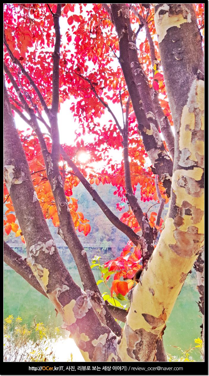 OCer, 가을사진, 가을풍경, 가을, 갤럭시노트5, 갤럭시노트5 후기, 갤럭시노트5 카메라, 갤럭시노트5 사진, 사진, it, 리뷰, 이슈
