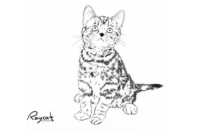고양이 6개월째 스케치