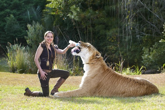Beau [Guinness World Records 2014 U2013 In Pictures]The Largest Living Cat