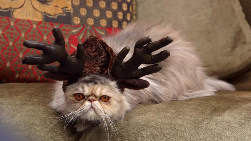 고양이에게 이상한 코스튬을 입히는 애묘인/집사들에게 전하는 메시지 - 고양이 사료 템테이션스(Temtations)의 TV광고