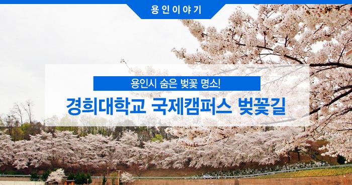 경희대학교 국제캠퍼스 벚꽃길