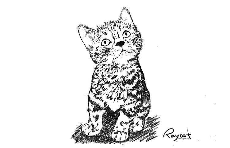고양이 생후 1개월 스케치