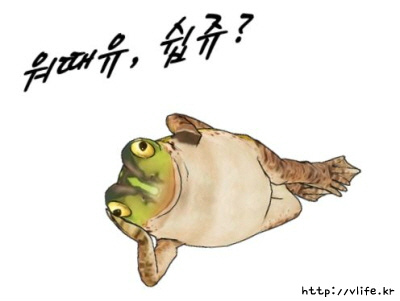 개구리 사진
