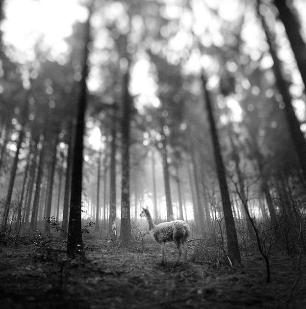 포토샵으로 자유가 된 동물들13