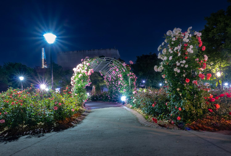 올림픽 공원의 밤 야화