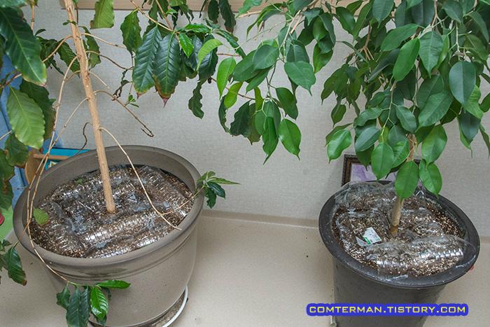 커피나무 킹벤자민 화분 덮개
