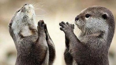기도하는 수달 ㅋㅋ
