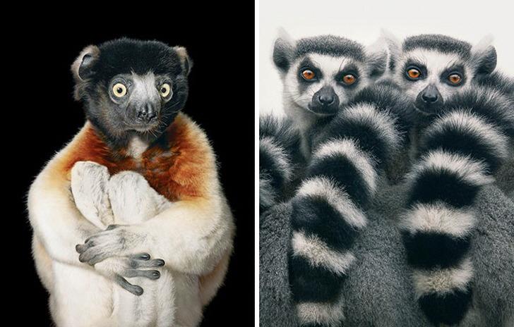 100년 뒤 지구상에서 못 볼 수도 있는 멸종 위기 동물들