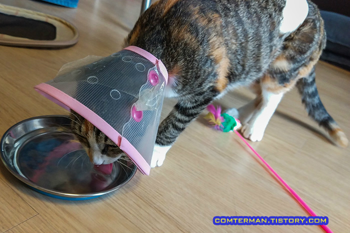 고양이 넥카라 물그릇