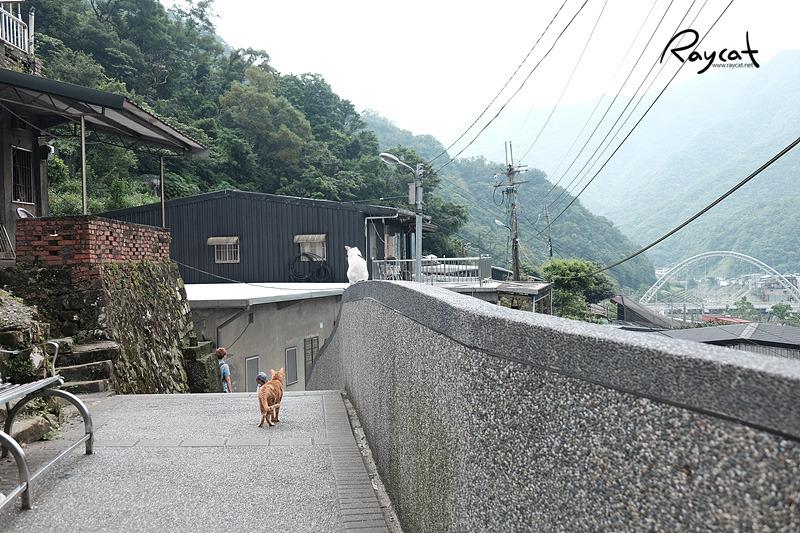 허우통 고양이 마을 고양이들