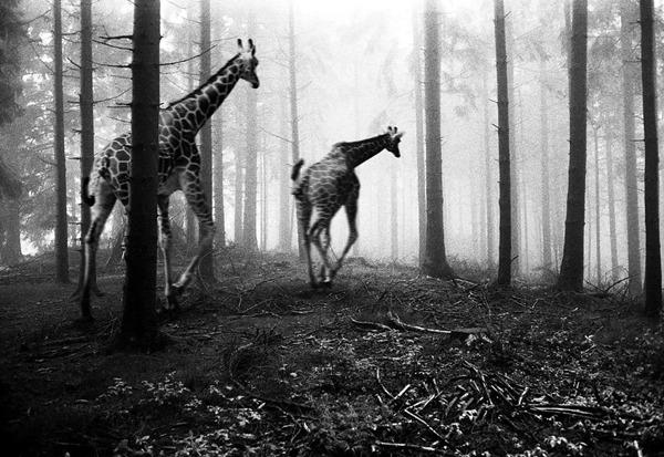 포토샵으로 자유가 된 동물들26