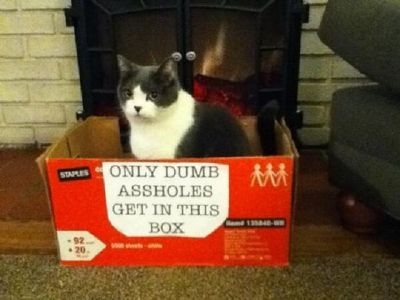 고양이 박스