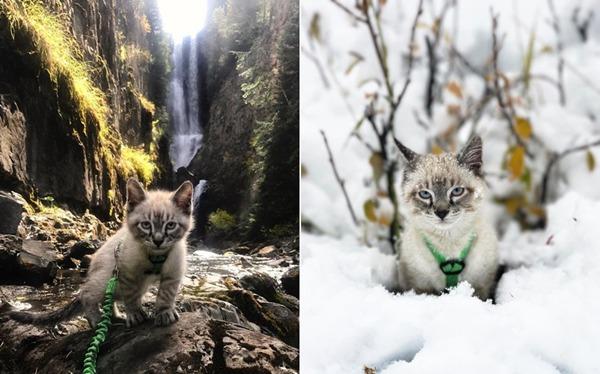 여행을 즐기는 고양이 발루