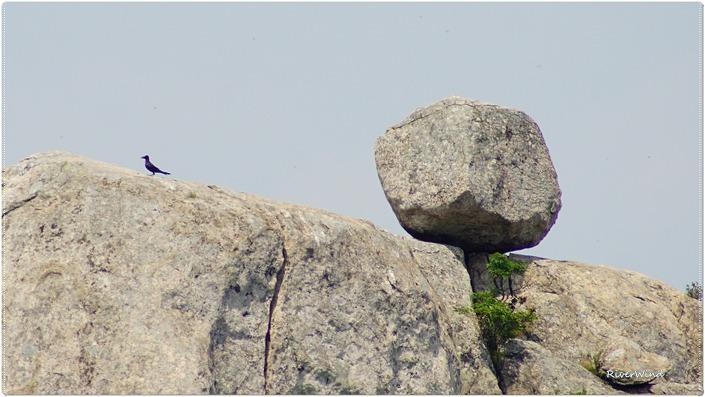 금정산의 굴러 떨어질것같은 바위