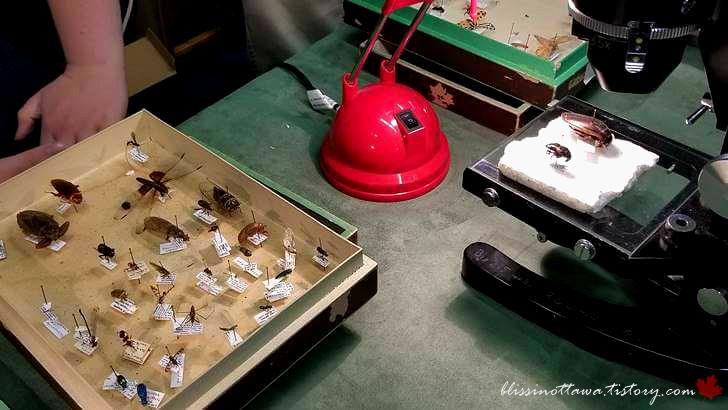 곤충 표본입니다