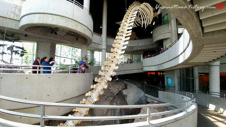 긴수염고래 해골입니다